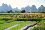 China  Rice Fields at the Yulong River  Landscape  Karst Mountains