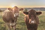Germany, Bavaria, AllgŠu, Nature, Cows, Sundown Papier Photo par Martin Zurek
