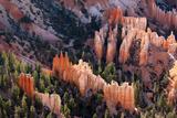 USA  Utah  Bryce Canyon  Amphitheatre