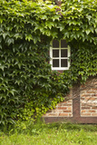 Farmhouse  Facade  Ivy Covered  Detail