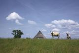 Ewe with Cub on the Elbe Dike Near Hollerwettern in the Wilster Marsh Near Wewelsfleth