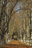 Luxembourg  Ansembourg Castle  Path  Avenue  Autumn Foliage