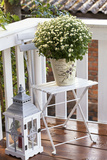 Flowerpot  Asters  Autumn Flowers  Chair  Lantern