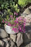 Flowers in Old Saucepan