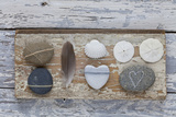 Still Life  Pebble Stones  Heart  Seashell  Feather