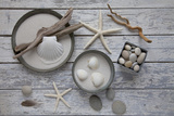Still Life  Natural Materials  Seashells  Stones  Starfishes  Driftwood