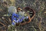 Meadow Flowers in the Basket