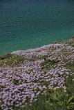 Meadow  Wild Flowers  Coast  England