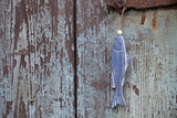 Wooden Fish  Fish  Door  Old