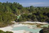 Wai-O-Tapu Thermal Wonderland  Bay of Plenty  North Island  New Zealand