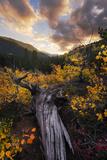 USA  America  Colorado  Aspen  Birches  Rocky Mountains  Sky  Mood  Sunset  Vastness
