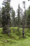 Forest at the Bottom of the Sas Dla Crusc  St Leonhard Close Abtei  South Tyrol  Italy  Europe