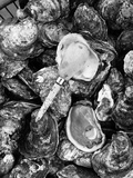 Shucked Oysters Papier Photo par A. Aubrey Bodine