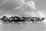 Pony Roundup