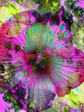 Composing of Coloured Flowers