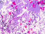 Photomontage of Trees in Purple Tones