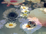 Colorful Photographic Layer Work of Blossoms