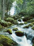 Forest  Torrent  Stones  Moss