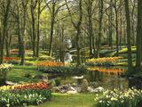 Netherlands  South Holland  Keukenhof  Flower Park  Spring