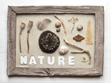 Still Life  Frame  Collection  Natural Materials
