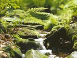 Forest  Brook  Vegetation  Moss  Ferns
