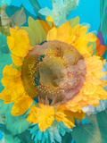 Montage of a Sunflower  Composing