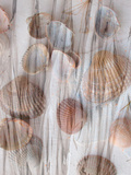 Photomontage of Grass and Mussels
