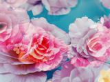 Photographic Layer Work from Blossoms in Water