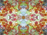 An Ornamental Symmetric Montage from Flowers and Seashells