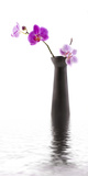 Orchid with Black Vase