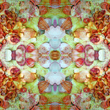 A Montage of Flowers and Seashells Turned into a Mandala