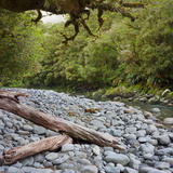 Cleddau River  Trunk  Fiordland National Park  Southland  South Island  New Zealand