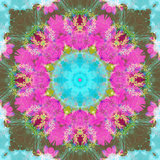 Colorful and Symmetric Photographic Layer Work of Blossoms