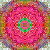 Montage of Flowers  Photographies in a Symmetrical Ornament  Mandala