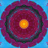 Colorful Symmetric Layer Work from Flowers