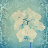 Composing  White Orchid Framed by Floral Pattern