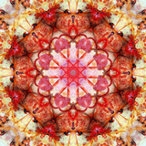 A Mandala Montage from Collected Acre Flowers