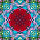 A Mandala from Flower Photographs and Water