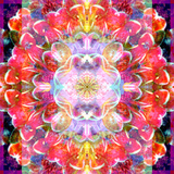 Mandala Ornament from Red Blooming Orchids  Conceptual Photographic Layer Work