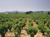 France  Rhone Valley  Chateauneuf Du Pape  Wine-Growing Area