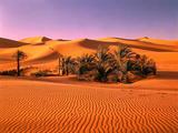Sahara  Black Bug  Toktokkie  Sand