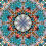 Mandala of Flower Photographies