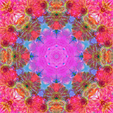 Multicolor Blossom Design from Zinnia  Gerber Daisy and Texture  Photographic Layer Work