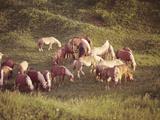 Horses  Haflinger  Meadow
