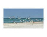 Beach Skimmers