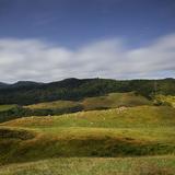 Sheep Pasture in the Moonlight  Wharariki  Tasman  South Island  New Zealand