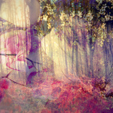 Dreamy and Fairy Photographic Layer Work of an Autumn Forest