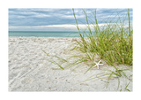 Star Fish and Sea Oats