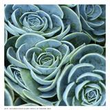 Blue Green Flora