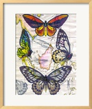 Butterfly Map IV